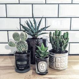 cactus-recup-min