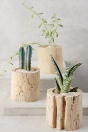 cactus-souche-min