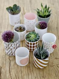 Mini-cactus-min