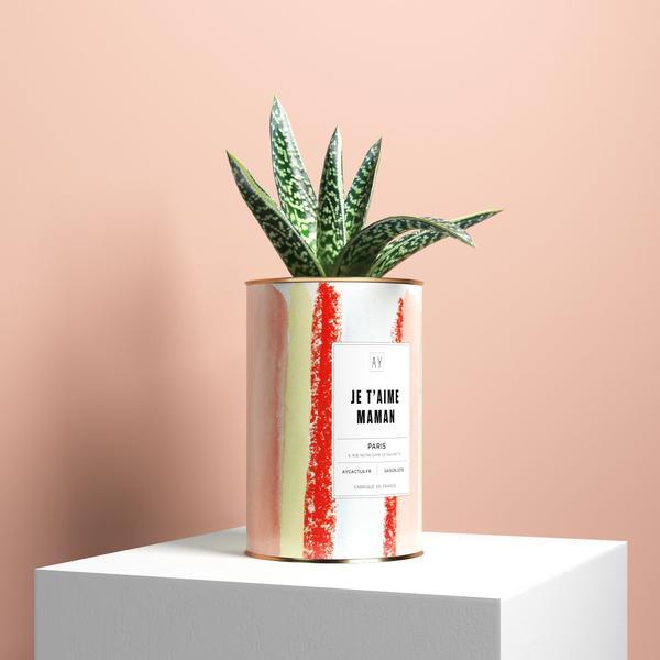 ay_cactus-min