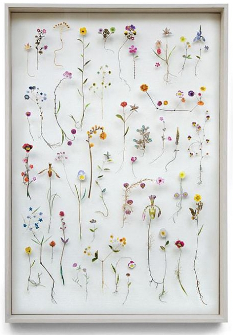 herbier-fleurs-sechees1-min.jpg