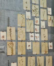 herbier-fleurs-sechees2-min