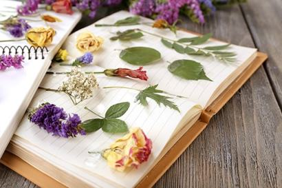 herbier-fleurs-sechees4-min