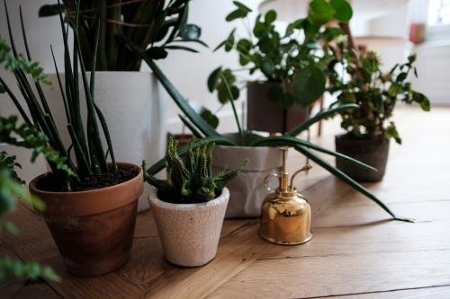 Petit jardin d'intérieur dans le bureau d'Agathe